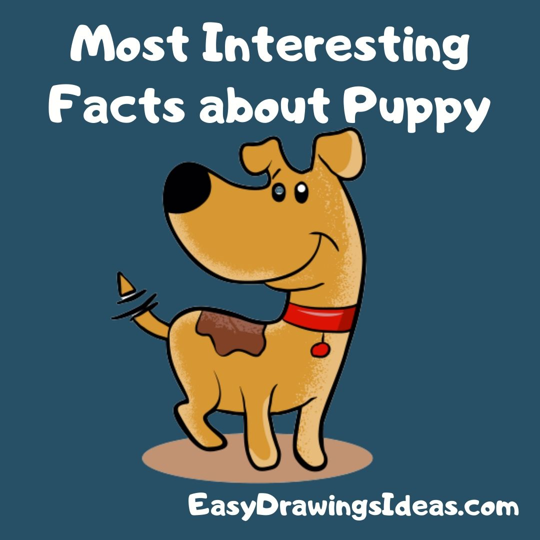 Most Interesting Facts about Puppy